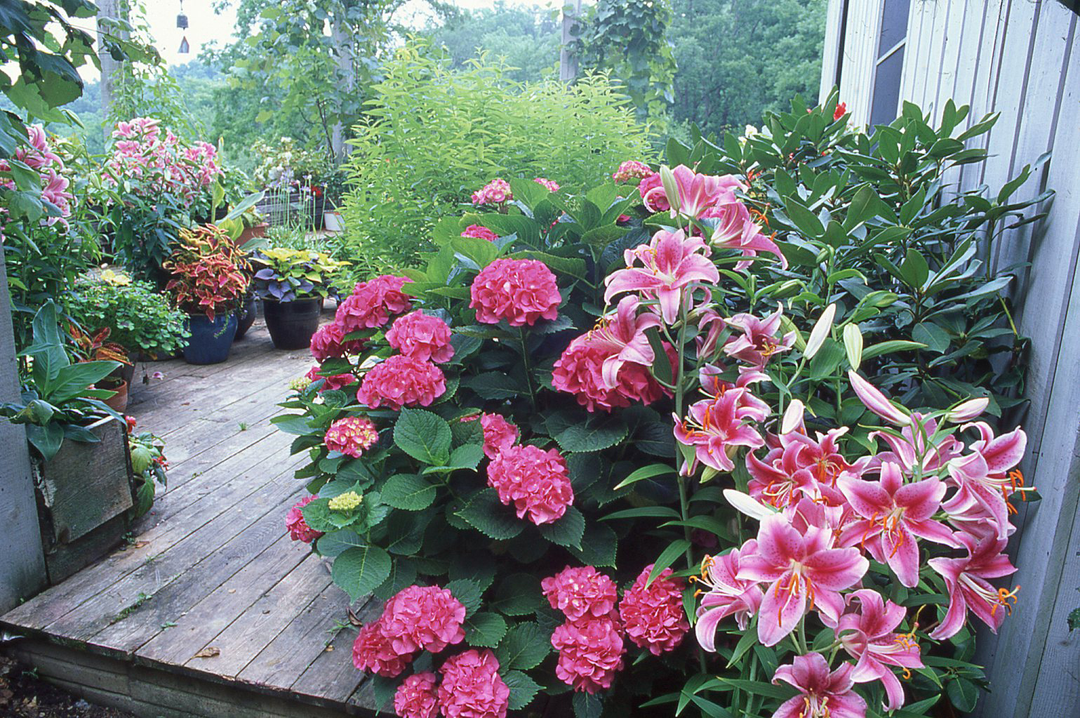 Container plants on the deck
