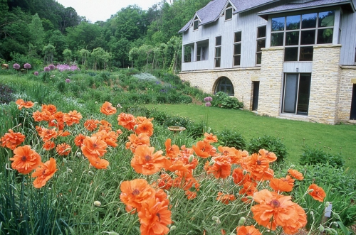 Poppies in the perennial border
